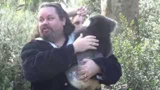 Koala Attack - Drop Bears - Paranormal - Haunting Australia