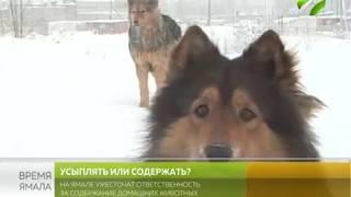 Собачий вопрос. На Ямале ужесточат ответственность за содержание домашних животных