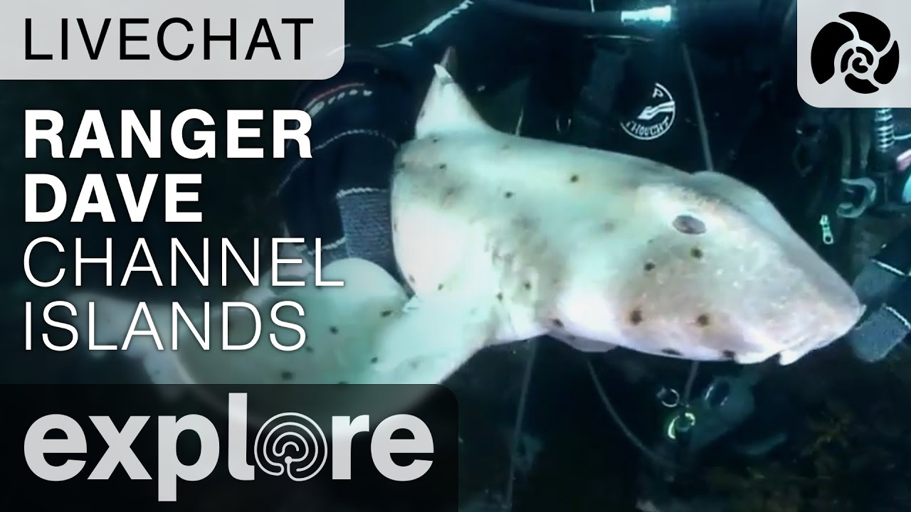 Ranger Dave Channel Islands - Underwater Live Chat