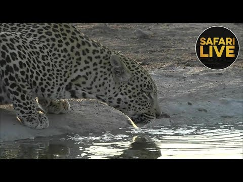 safariLIVE - Sunset Safari - October 11, 2018