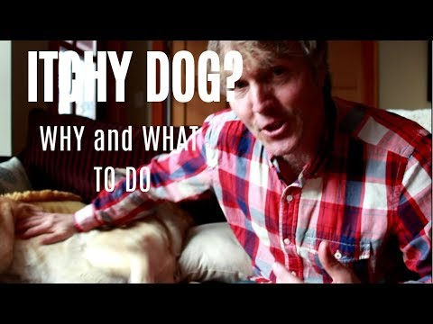 Itchy Dog? Find Out Why and What To Do