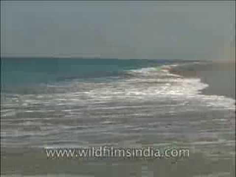 Arabian Sea waves strike the Gujarat coast at Porbander
