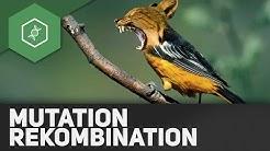 Mutation und Rekombination – Evolutionsfaktoren 1 ● Gehe auf SIMPLECLUB.DE/GO & werde #EinserSchüler