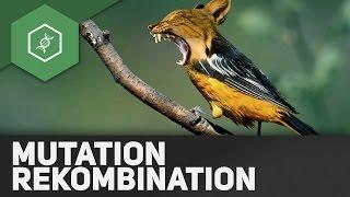 Mutation und Rekombination – Evolutionsfaktoren 1