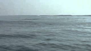 Whale sighting/Eastern Shore of Virginia 2015