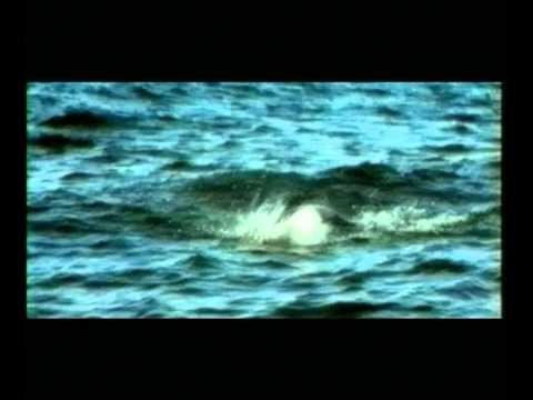 Music video Евгений Осин - Простите