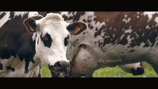 La petite histoire des grands fromages AOP de Normandie