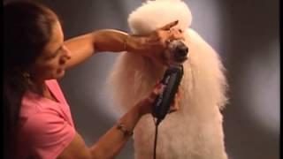 Dog Grooming - Poodle - Lamb Trim