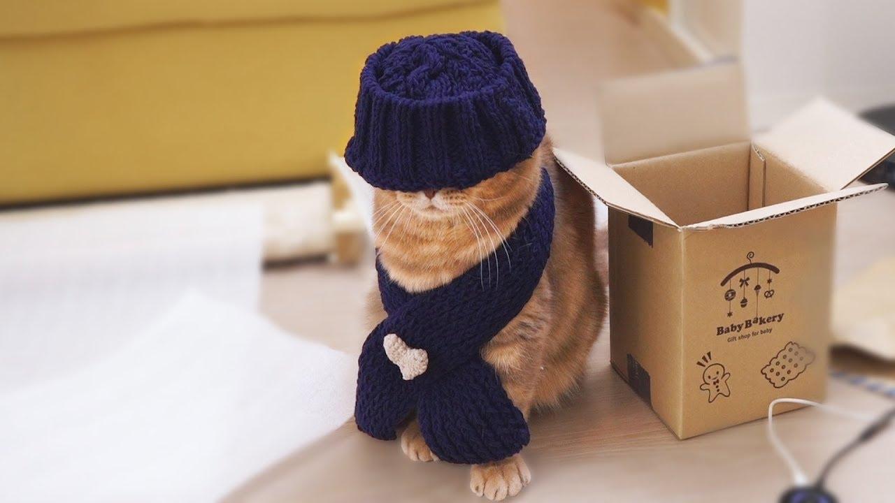 추운-겨울-고양이를-위한-방한룩을-입혔어요
