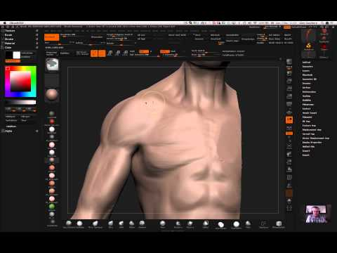Free anatomy tutorial: arm muscles by Glen Southern