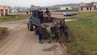 Реалии белорусского колхоза СПК, трактор с толкача)))