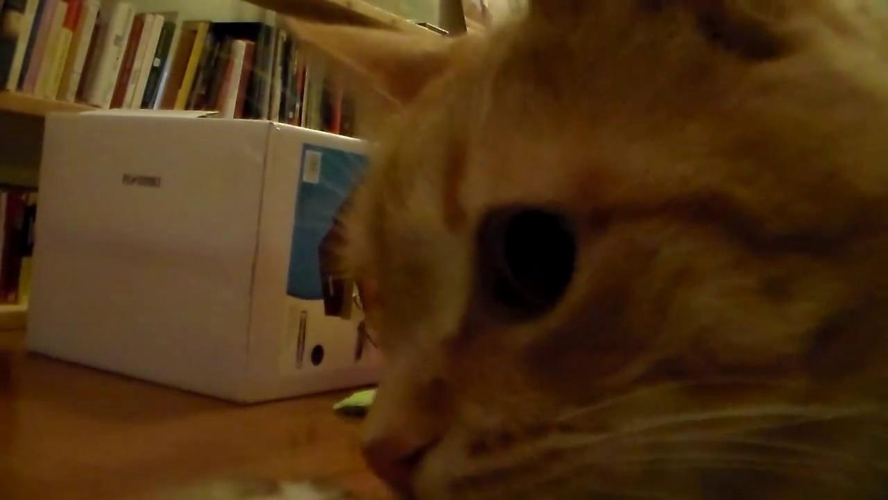 CATS NOTICE VIDEO CAMERA