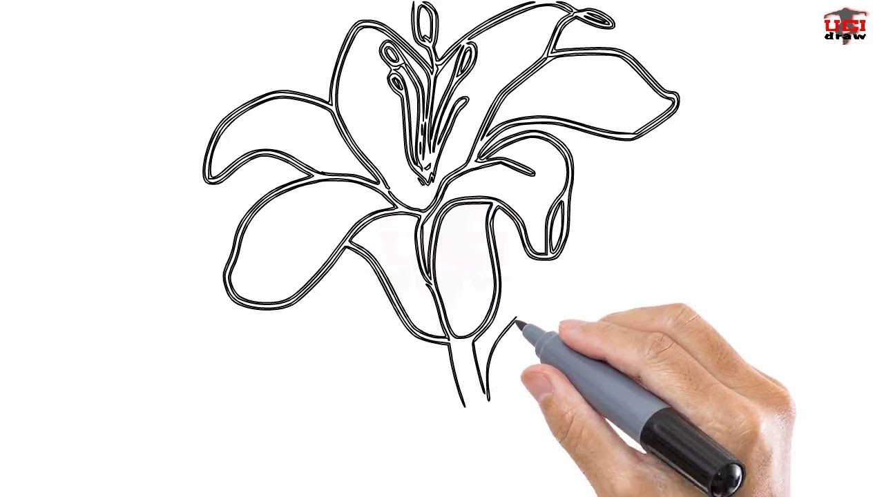 how to draw a lily easy step by step drawing tutorials for kids ucidraw