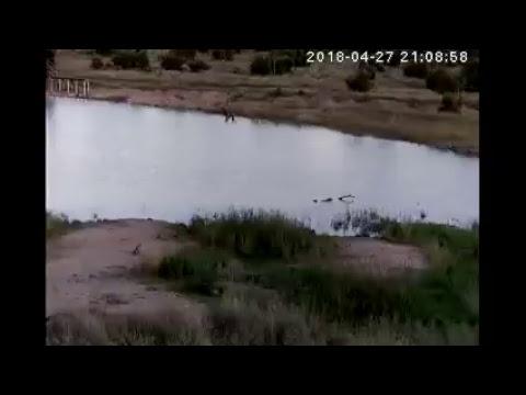 Africa Wildlife Cam Live Stream