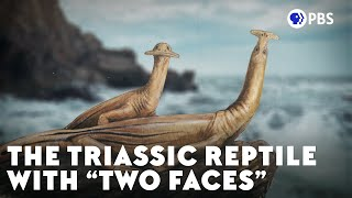 "The Triassic Reptile With ""Two Faces"""