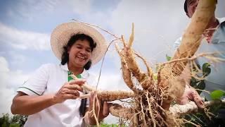 50 ปี กรมส่งเสริมการเกษตร