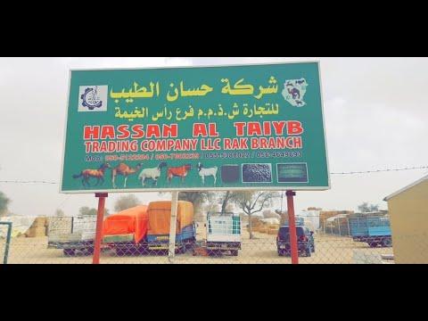 شركة حسان الطيب للتجارة  HASSAN AL TAIYB TRADING