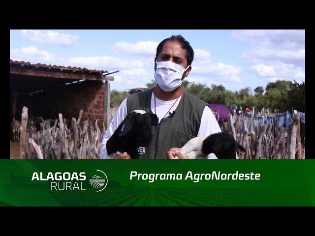 Em 2020 foram iniciadas as atividades do programa AgroNordeste