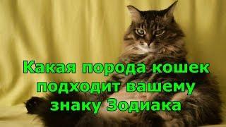 А ВЫ ЗНАЕТЕ, какая порода кошек ближе вам по знаку Зодиака?