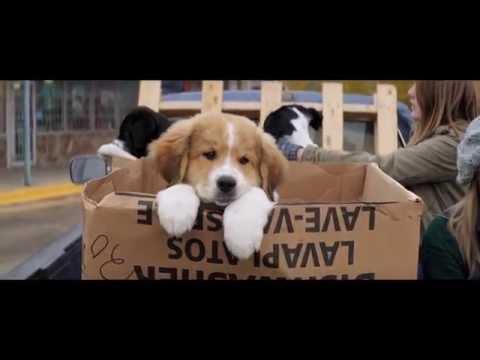 A DOG'S PURPOSE Film TRAILER
