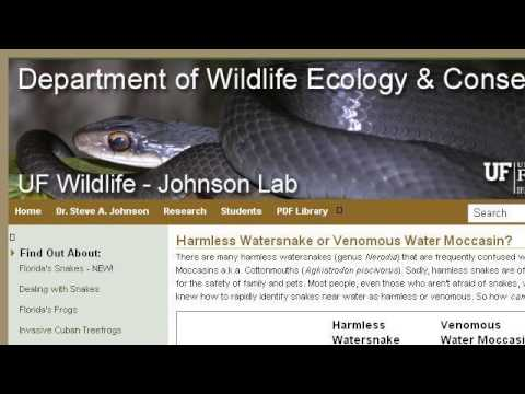 The Difference Between A Cottonmouth And A Water Moccasin ...