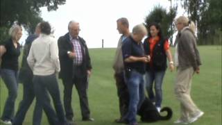Rottweiler Ztp - Dante V. Herrenholz