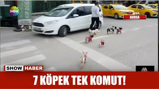 7 köpek tek komut!