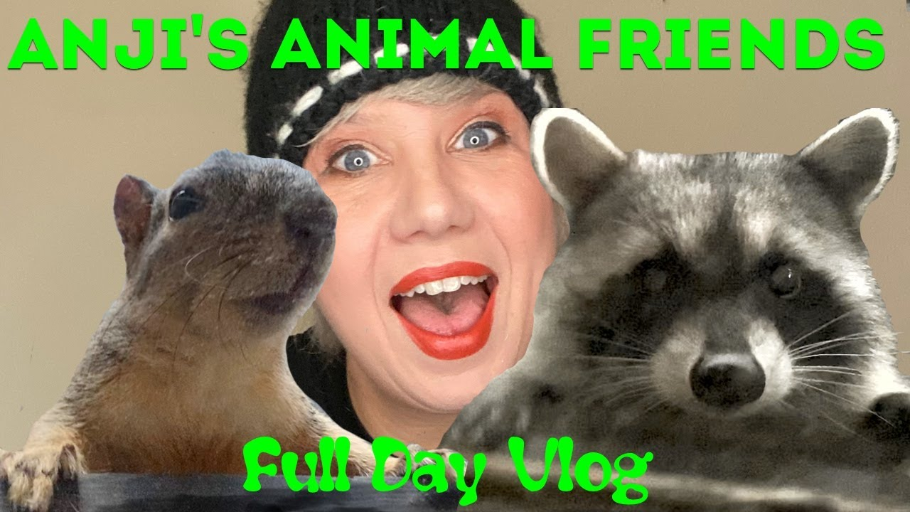 Anji's Animal Friends VLOG: Racoons, Opossums, Squirrels & Cats Together