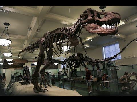 Нью-Йорк: Музей естественной истории/NYC: American Museum of Natural History