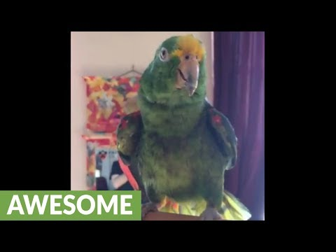 Parrot incredibly sings beautiful duet with human