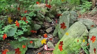 #가을시 나호열의 가을