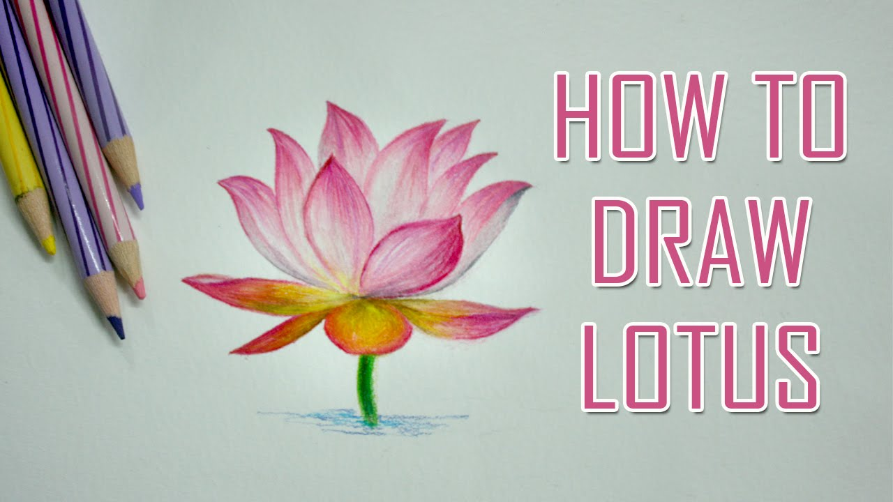 How to draw a flower lotus color pencil youtube izmirmasajfo