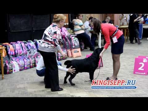 Выставка собак со всего МИРА в Кингисеппе KINGISEPP.RU