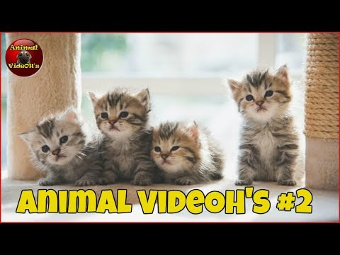 Funny Animals, Funny Pets, Cats, Dogs, Kittens and Puppies - Animals are Amazing! #2