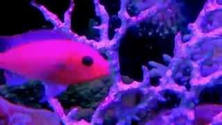 Классический аквариум с рыбками