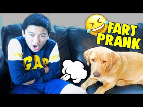 My Dog Reacts to Fart Toy - Fart Prank With My Labrador Retriever!!! Funny Cute Dog Reaction!