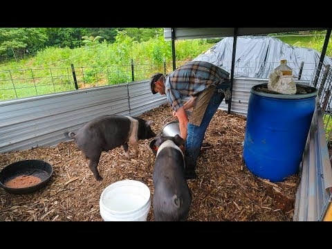 Simple Pin Makes Back Yard PIGS Possible (and Pleasurable)