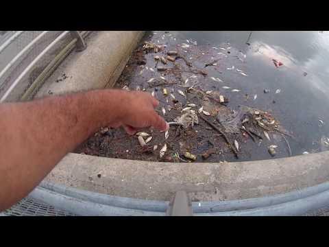 Flushing Meadows Corona Park Fishing -  Queens, NY