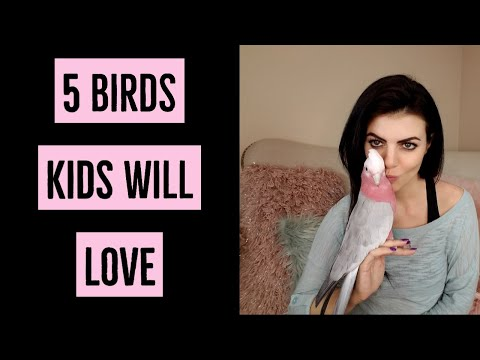 5 Pet Birds Great For Kids | PARRONT TIP TUESDAY