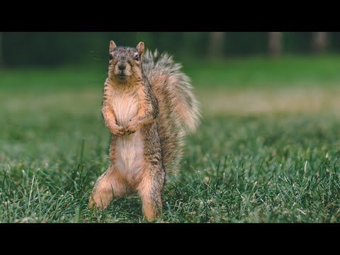 8 Hour Addicting Video For Cats and Dogs - With Squirrels - Leave On For Pets
