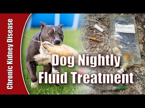 Daily Home Fluid Treatment - Dog Chronic Kidney Disease