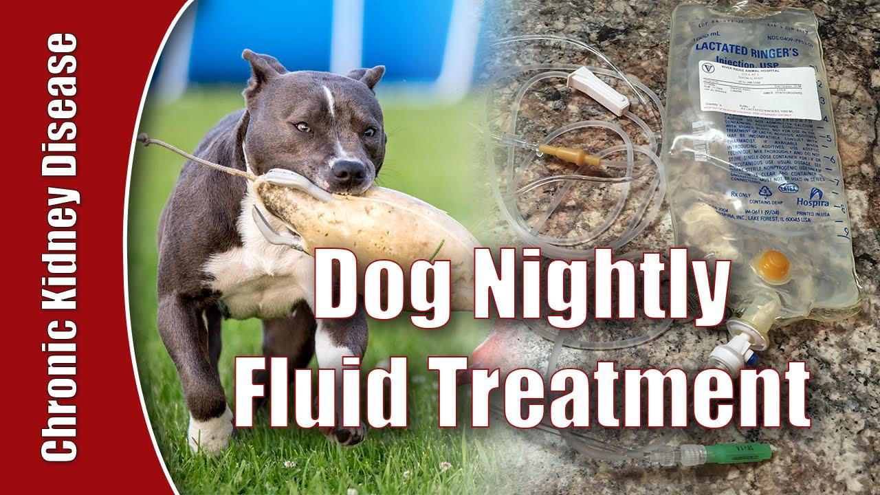 Daily Home Fluid Treatment Dog Chronic Kidney Disease Youtube