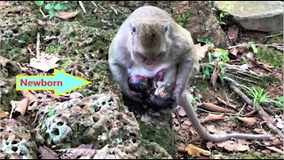 Download lagu SURPRISE.! THIS REAL ACT OF MONKEY GIVING A BIRTH, HAVE YOU EVER SEEN MONKEY DELIVERY ? REMEMBER HER