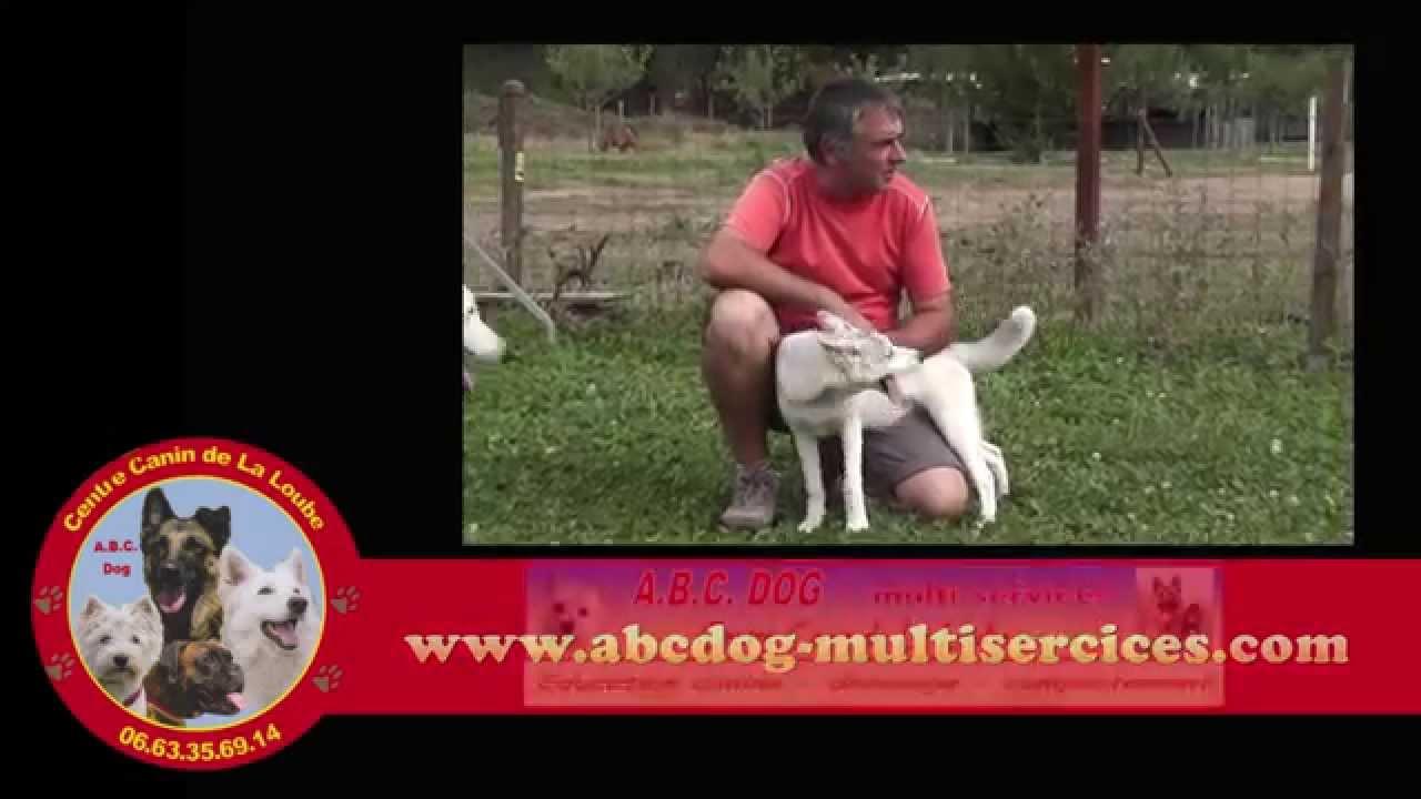 dressage chien 06