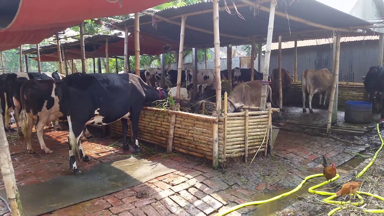 Mrittika Dairy Farm In Pabna Bangladesh And Sells Points