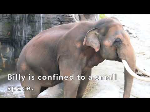 Captivity is NOT Conservation