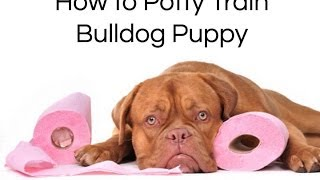 How To Train Bulldog : How To Potty Train Bulldog Puppy