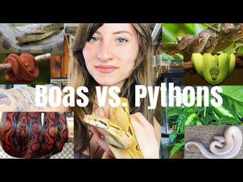 Boas Vs. Pythons (Similarities & Differences)
