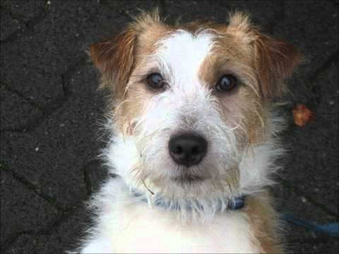 All types of dog breeds - YouTube