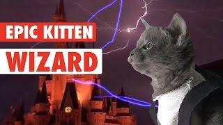 Kitten Wizard Takes Over the World
